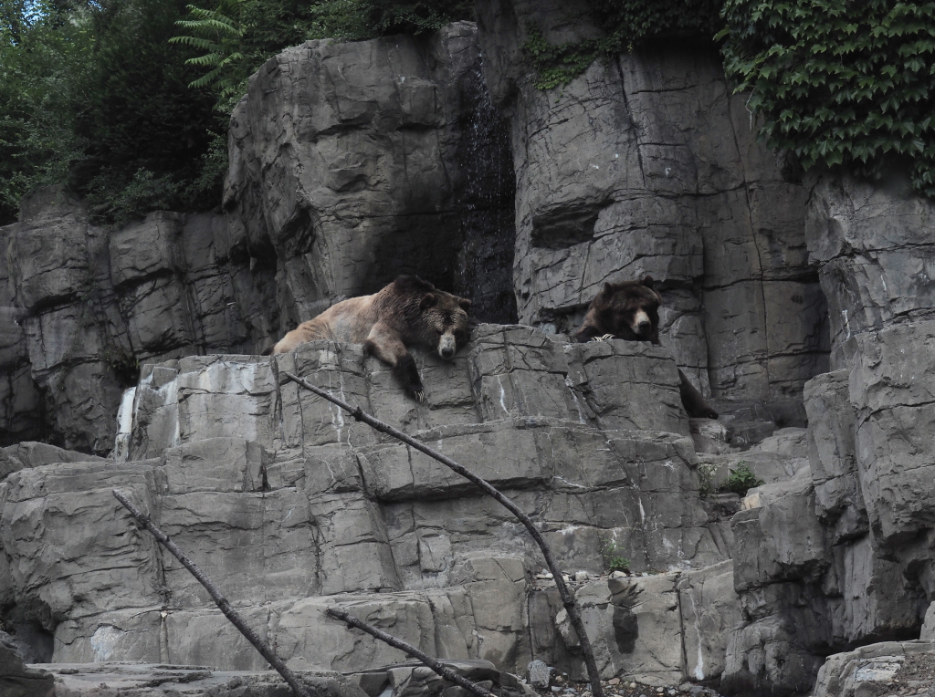 bears at central park
