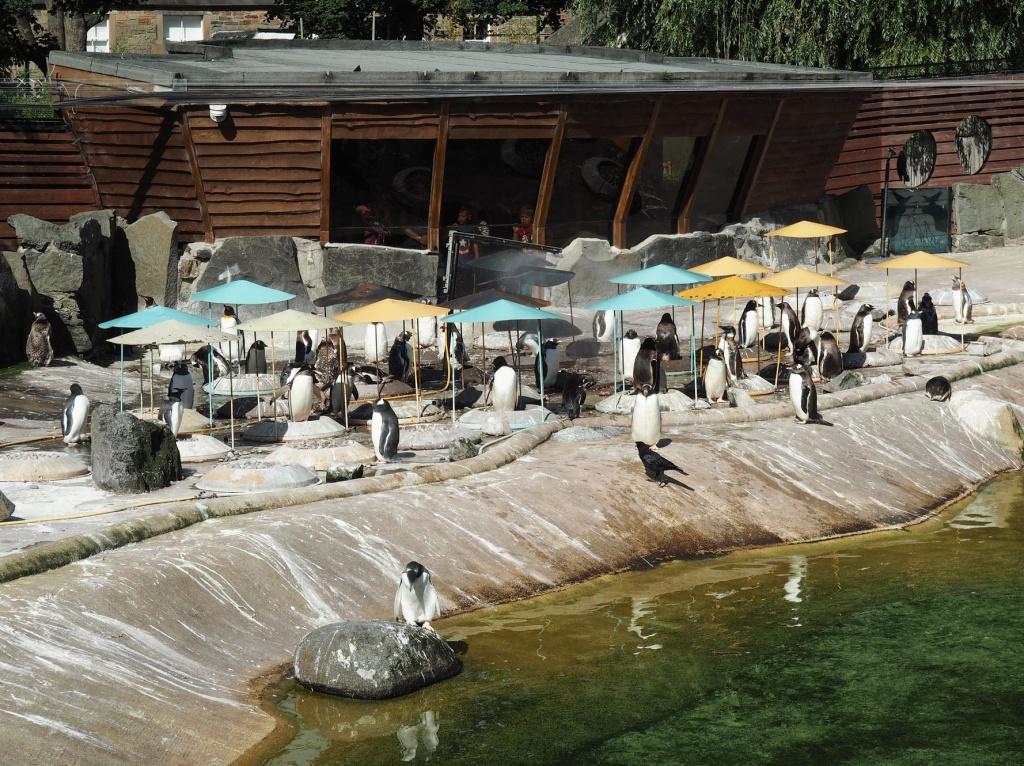 Edinburgh Zoo Penguins