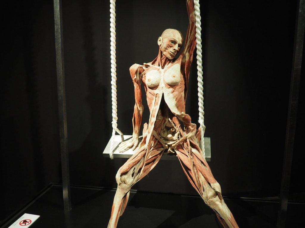Amsterdam Body Worlds
