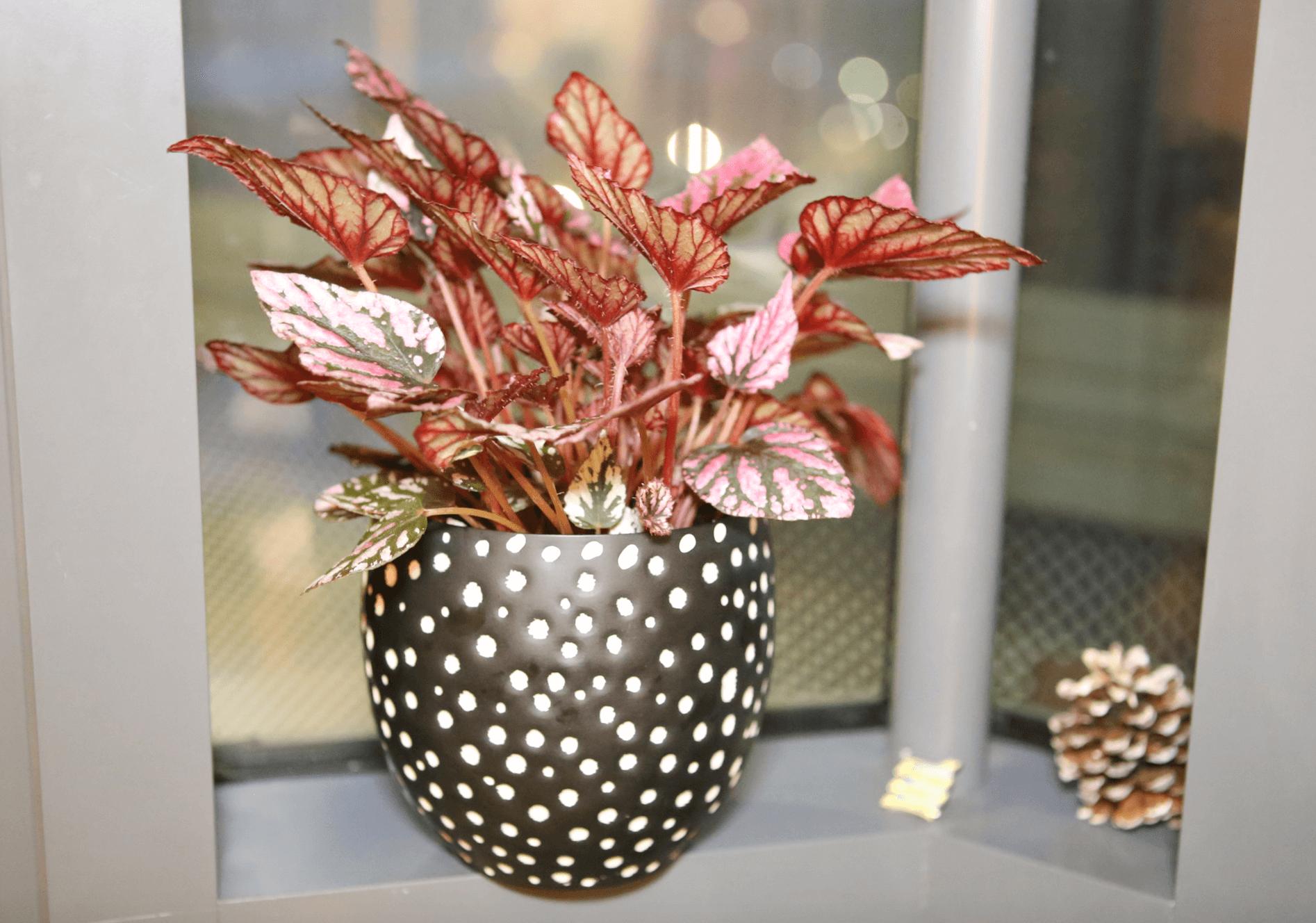 H&M polka dot planter