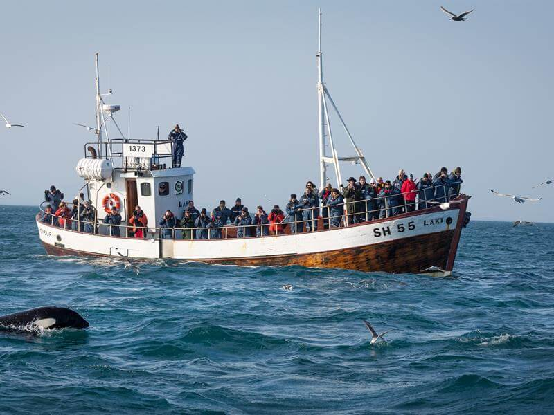 whale watching boat in iceland